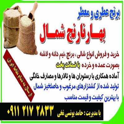 تبلیغات فروش برنج شمال